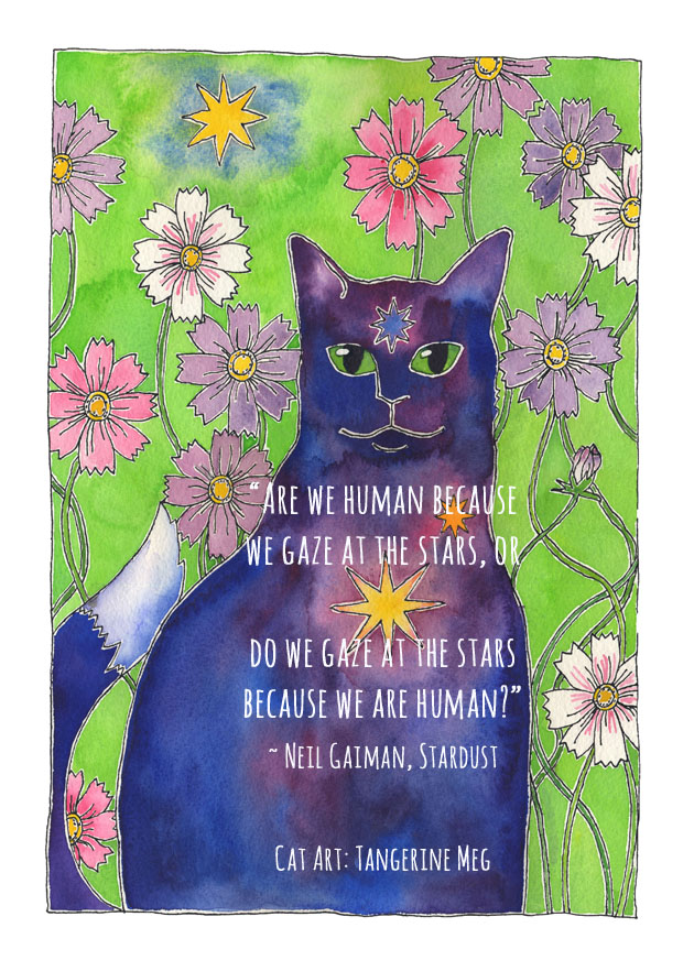 Cat Art: Water colour painting of a blue cat with a shining golden star in his heart gazes at us from his garden of cosmos flowers.
