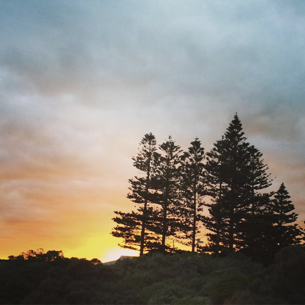 Trees at Sunrise, Fleurieu Peninsula